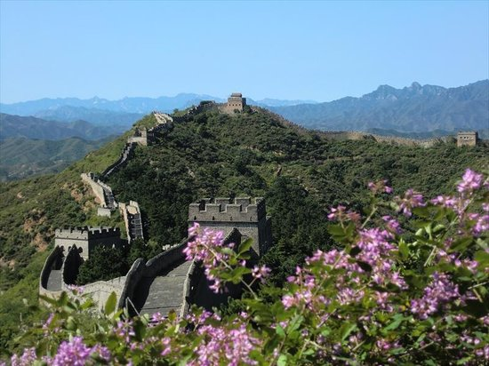 Jinshanling Great Wall: 萩の花咲く金山嶺長城