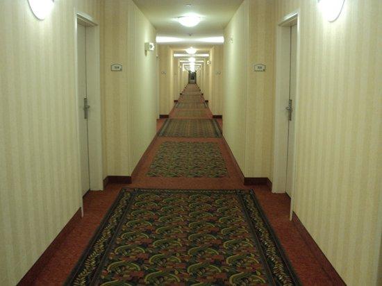 Hilton Garden Inn Salt Lake City/Layton: Corridors