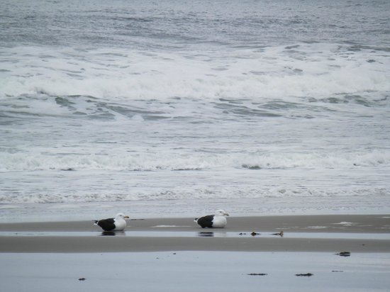 Hampton State Beach: Two of the locals enjoying the surf