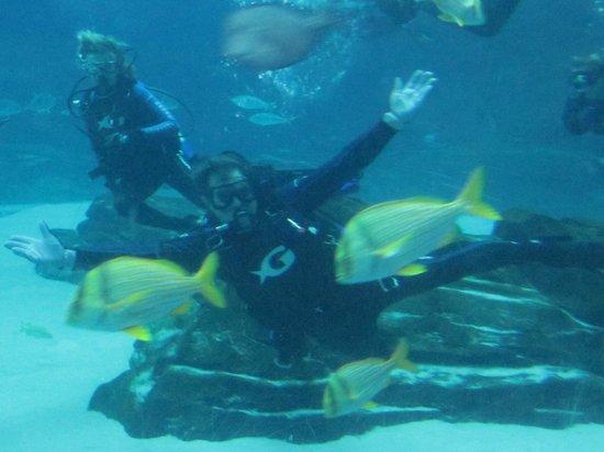 Georgia Aquarium : Mike swims with big fish!