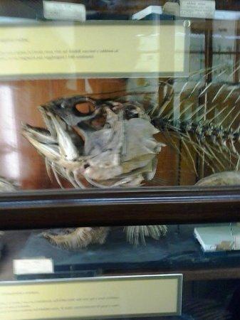 Museo Di Zoologia P. Doderlein