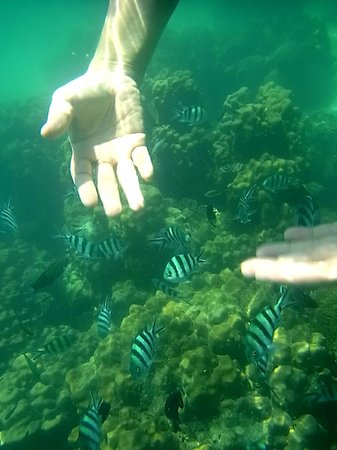 Koh Talu Island: Don't touch the fishes, but they grit me !