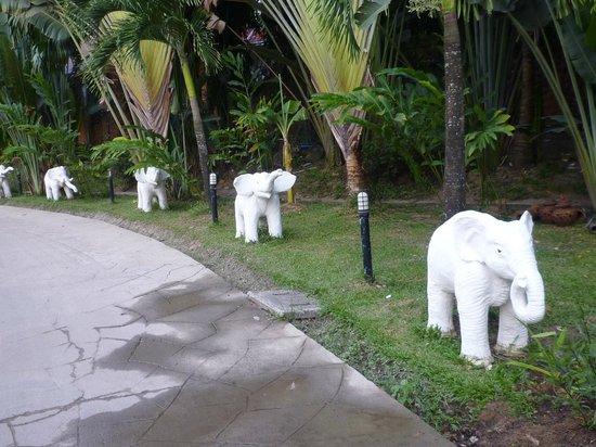 Chang Park Resort & Spa: Территория отеля