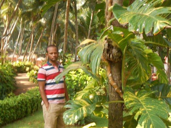 Thapovan Heritage Home : Garden
