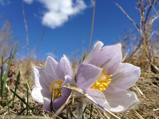 Parque Provincial Fish Creek: Crocus in late April, Fish Creek