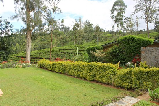 Ceylon Tea Trails : Room View