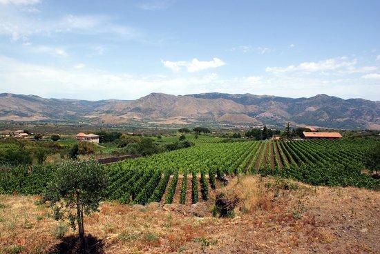 Wiegner Azienda Agricola Puccetti Laura