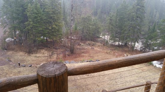 Baptism River Inn Bed and Breakfast: the view from our deck, check out the deer in the distance to the right