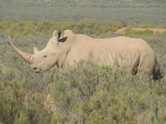 Aquila Private Game Reserve - Day Trip Safari: One of the animals we saw