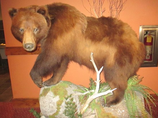 Lodge at Whitefish Lake: Bear at Whitefish Lodge.