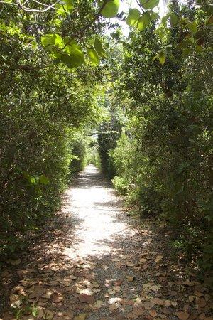 Hugh Taylor Birch State Park: trails