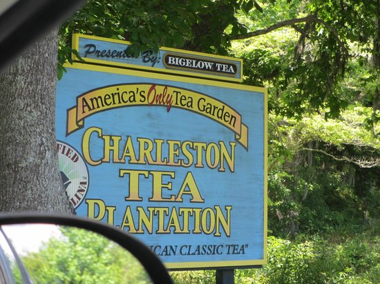 Charleston Tea Plantation : Entrance