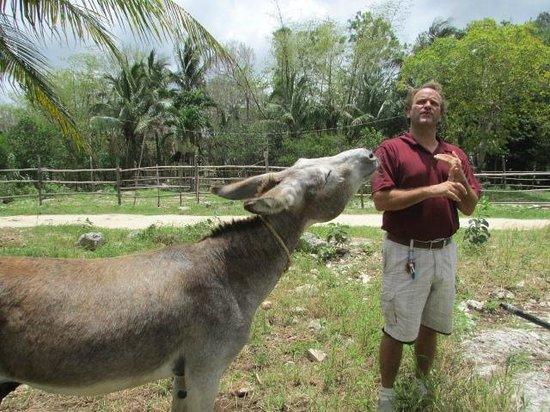 "Tulum Monkey Sanctuary: Donkey on ""time out"" due to bad behaviour"