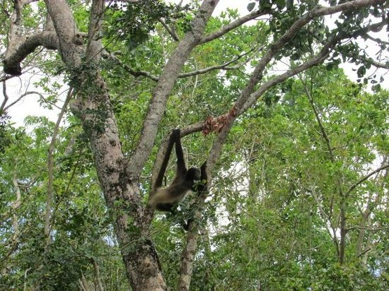 Tulum Monkey Sanctuary: The animals