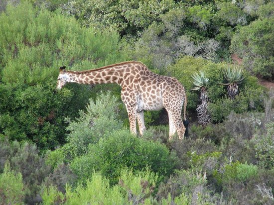 Nyaru Private Game Lodge: Getting up close on the quad game drive