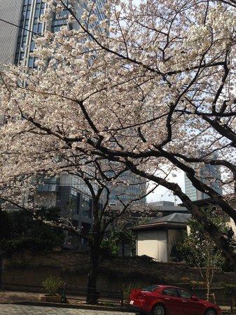 ANA InterContinental Tokyo: Sakura
