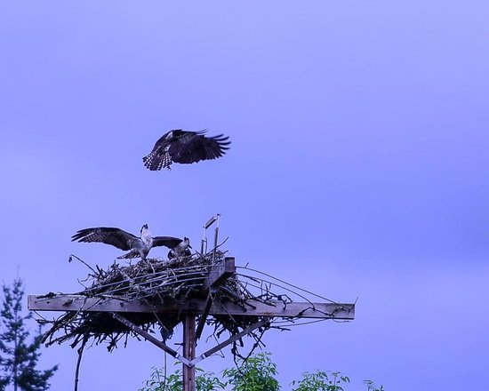Jackson Bottom Wetlands Preserve: Nesting