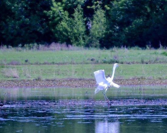 Jackson Bottom Wetlands Preserve: Landing