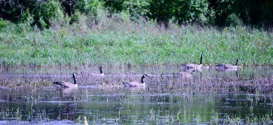 Jackson Bottom Wetlands Preserve: Babies
