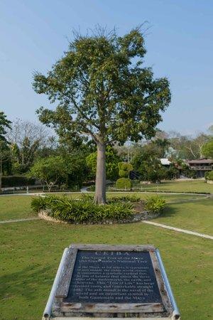 La Casa De Don David: Ceiba del jardín
