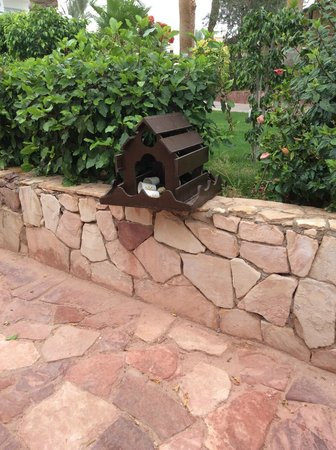 Jaz Fanara Resort & Residence: стаканчики пролежали в скворечнике 3 недели! может еще лежат....