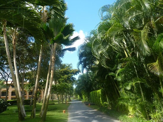 Iberostar Hacienda Dominicus: Jardins à l'arrière des chambres