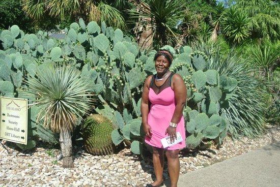 Alamo Sightseeing Tours: i found the cactus.
