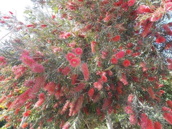 The Makadi Palace Hotel: цветущие весенние кусты