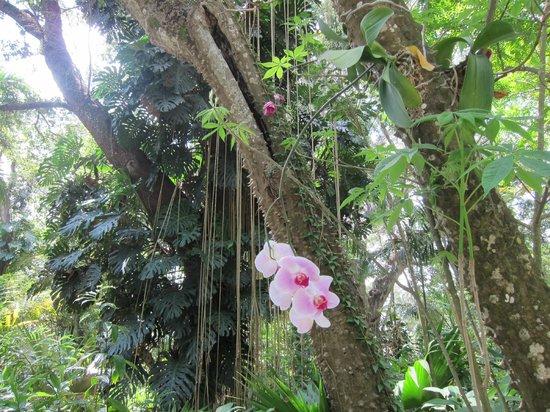 Flamingo Gardens: Flamingo Park - Orkid