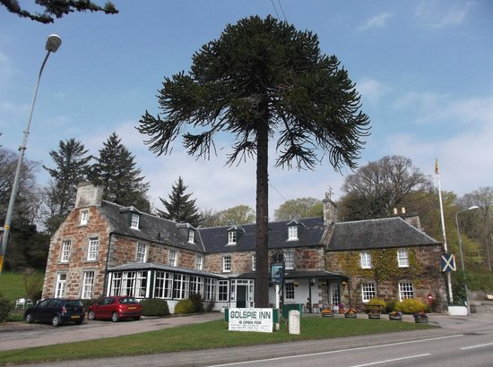 Golspie Inn with its famous monkey puzzle tree
