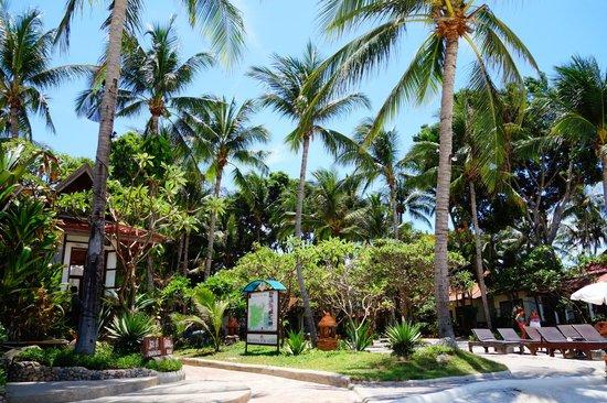 Chaweng Buri Resort : Blick vom Strand auf die Anlage