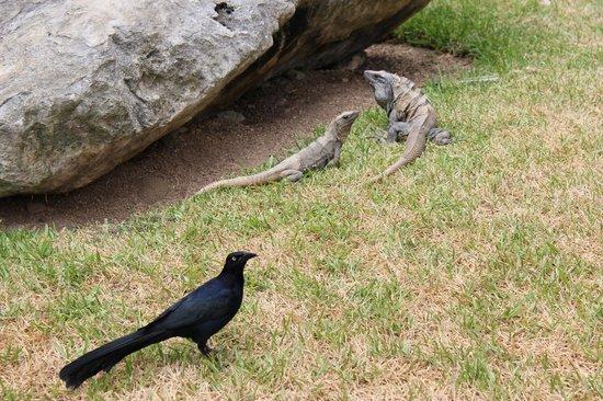Grand Palladium Colonial Resort & Spa : Animals