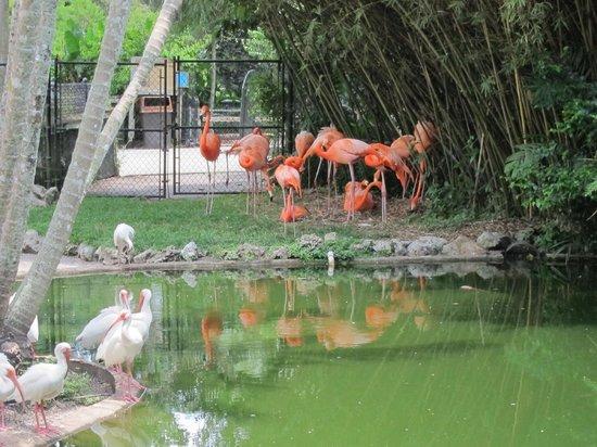Flamingo Park Flamingos Picture Of Flamingo Gardens Davie Tripadvisor