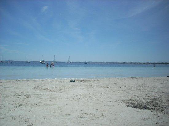 Playa de Alcudia: clear sea