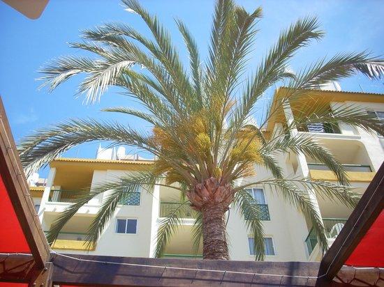 Viva Tropic : may sunshine