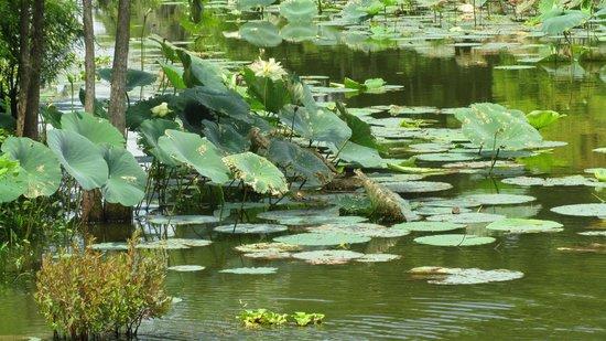 Lake Martin Rookery : Lake Martin