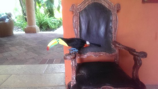 Sofitel Legend Santa Clara : Monsieur le resident toucan who might visit during breakfast