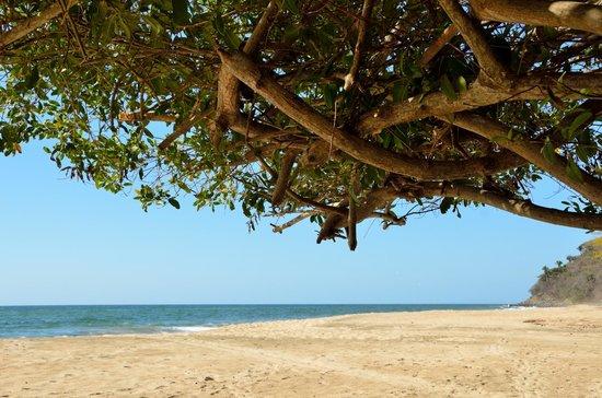 Punta Monterrey Beach: Vista de Playa
