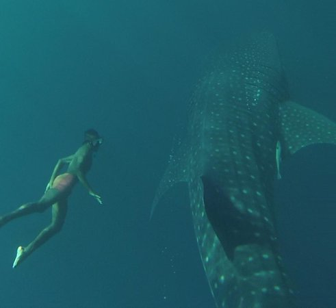 Nabire, Indonesien: One of our Papuan guides and a whale shark