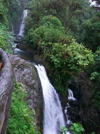 La Paz Waterfall Gardens: mas cascadas
