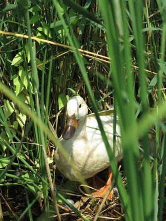 Wetlands Safari : Lots of animals along the way.