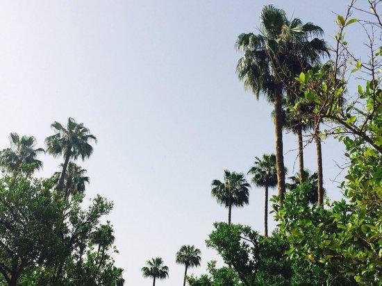 Sensimar Medina Gardens : Medina Garden