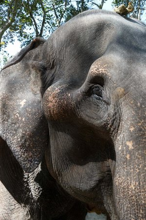 "Elephant Junction - Day Tours: ""It was Emotional"" You get close to the elephants and really ""bond"" with them"