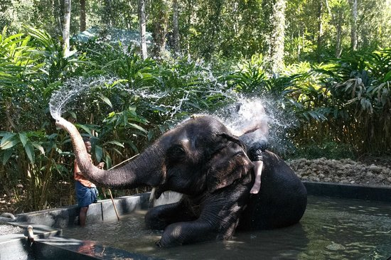 Elephant Junction - Day Tours: Bathtime with the Elephants