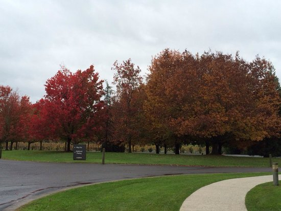 Domaine Chandon: Fall foliage at the winery