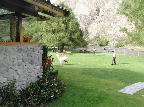 Belmond Hotel Rio Sagrado: area outside the restaurant