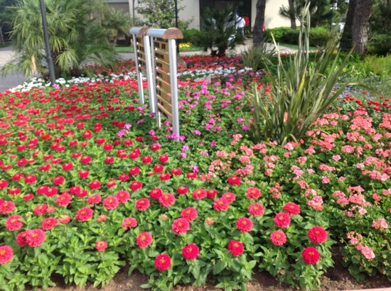 Voyage Belek Golf & Spa : lovely border