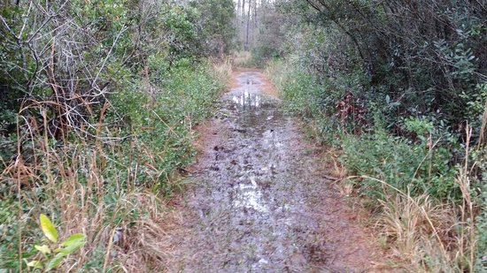 Paynes Prairie Preserve State Park: A little water on the trail