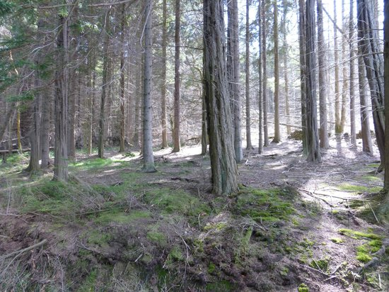 Hamsterley Forest: Forest walk