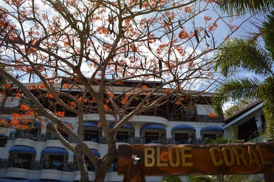 Blue Coral Beach Resort : Deluxe rooms